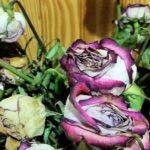 dead roses represent lost souls (Table of Contents)