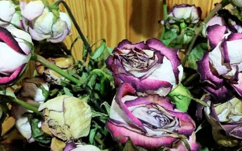 dead roses represent lost souls