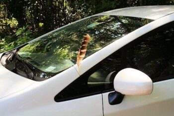 Hawk feather miraculously stuck in the car fram