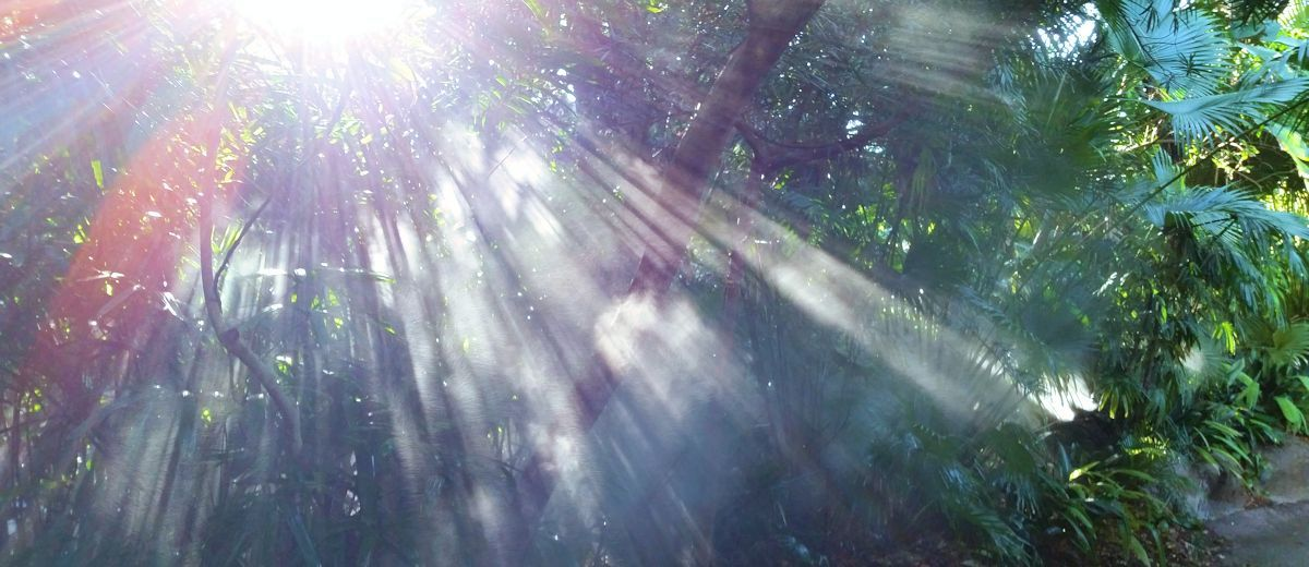Rays of divine illumination remind us of what saints and mystics have revealed